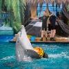 Дельфинарии, океанариумы в Кинель-Черкасc