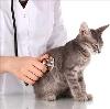 Ветеринарные клиники в Кинель-Черкасc